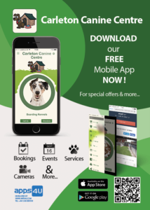 App4U flyer for Carelton Canine Centre